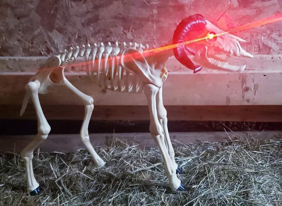 Family Friendly Flashlight Fright Farm
